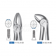 Dental Forcep 150