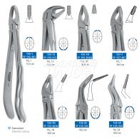 Dental Forcep 155