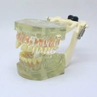 Transparent Model DM 104 #HL-60104
