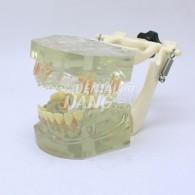 Transparent Model DM 106 #HL-60106